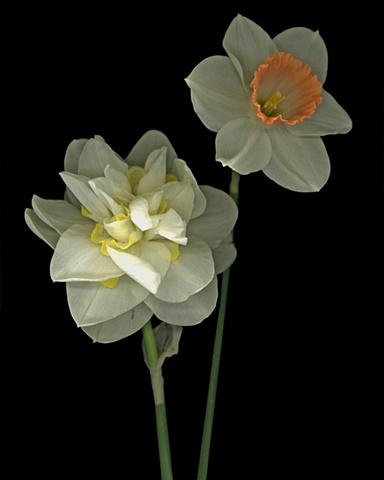 #57 bloom