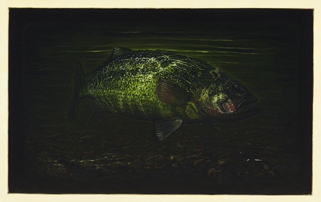 Oil painting of a migrating largemouth bass from Lake Ontario into Ellicott Creek during the summer of 2009.
