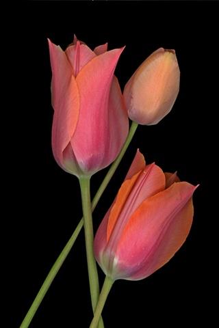 #37 bloom