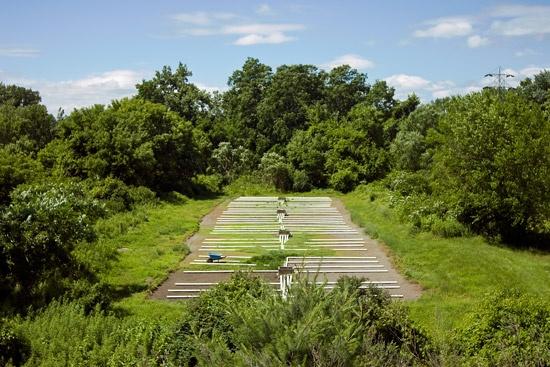 Dave Hebb - Irrigated Field #4:  June 23, 2009