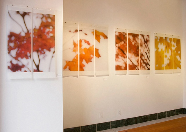 Recent installation of pieces from my series 'A Sojourn in Seasons', 'After Equinox' chapter.  Work is printed on Japanese Kozo and infused with encaustics; images are captured with oversized pinhole or defocused lens.