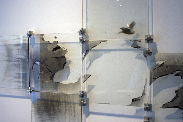 photo emulsion, photogram, glass plates, images on glass