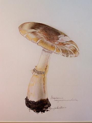 Spring mushroom 1