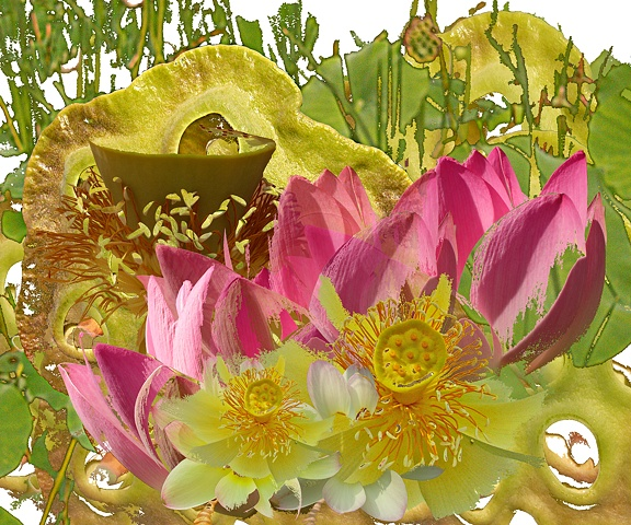 Montage of lotus flowers, leaves, and pods