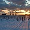 JoAnne Dumas  Long Shadows of Winter Vines