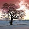 JoAnne Dumas  Winter Sunrise with Old Tree
