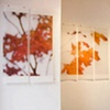 Recent installation of pieces from 'A Sojourn in Seasons', 'After Equinox' chapter