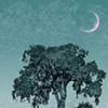 Elmtree Twilight