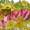 Lotus Montage