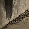 E. Elizabeth Peters Ashes + Dust (detail)