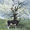 Heifer in the Orchard