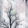 Crows of November