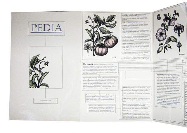 Pedia (Layout detail)