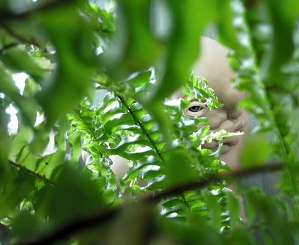 Eye of the Jungle