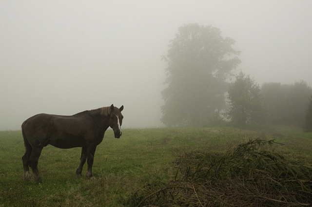Horse in fog, Czech Republic