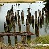 Pilings, Whidby Island, WA