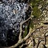 Black Pool, Robert Frost Trail, Amherst MA