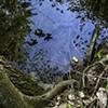 Blue Pool, Adlai's Woods