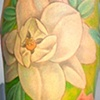 carolyn magnolia