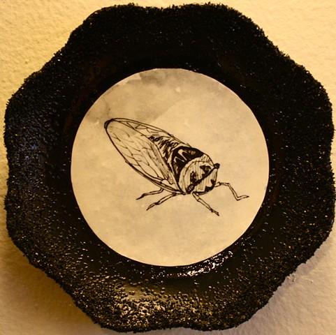 Cicada On Porcelain
