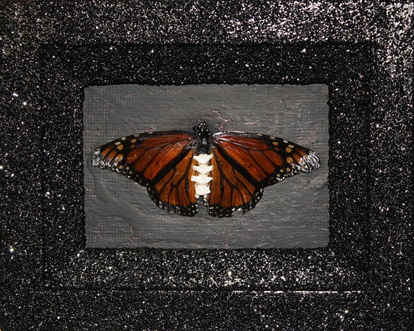 monarch butterfly with spinal column for body, found frame, recycled object, on black background with black glitter frame