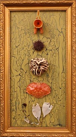 bone, echinoderm, kelp anchor, carapace, found frame