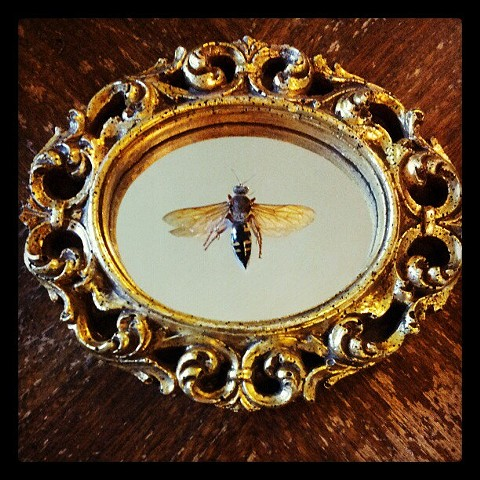 wasp on recycled mirror