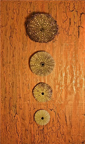 4 sea urchins and acrylic on recycled wood