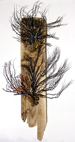 found beach wood, sea fans, and acrylic