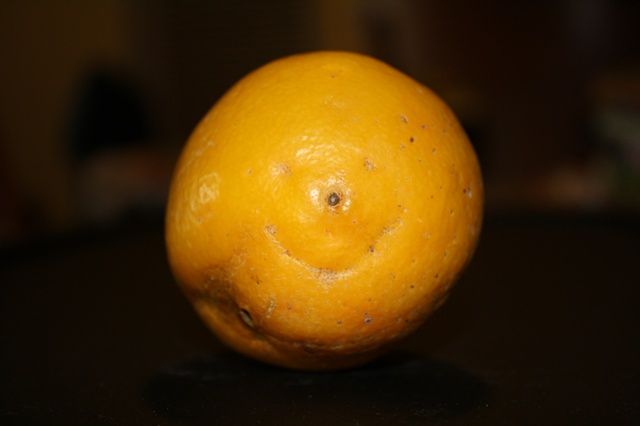 never saw a happier lemon