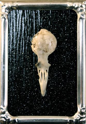 bird skull on black glitter background silver metal frame recycled art found object