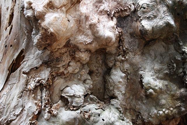 Tree #6
