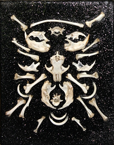 found rodent bones on canvas with glitter black background