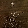 Wheat Woman (SOLD)