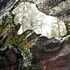 Sequoia Window