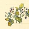 Native Plant Series (1999-2002)
