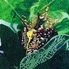 Bromeliad I