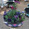 Girlie Trapezoids  with winter annuals arrangement