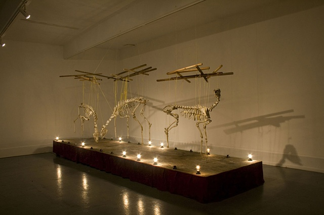 SALVAGE is an installation work created from the rearticulated bones of deer carcasses found at a state highway roadkill dump site.