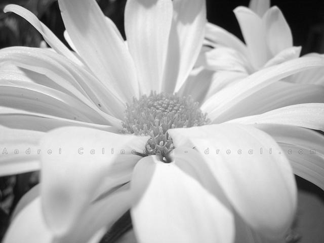 Photo, photograph, photographer , photography , digital, camera, Canon, lighting, setting, natural, light