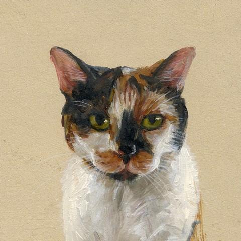Angie's Cat