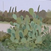 Evening Cactus