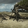 Árvore da preguiça