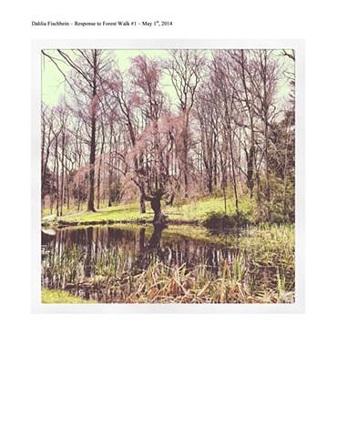 Forest Walk #1 - 4