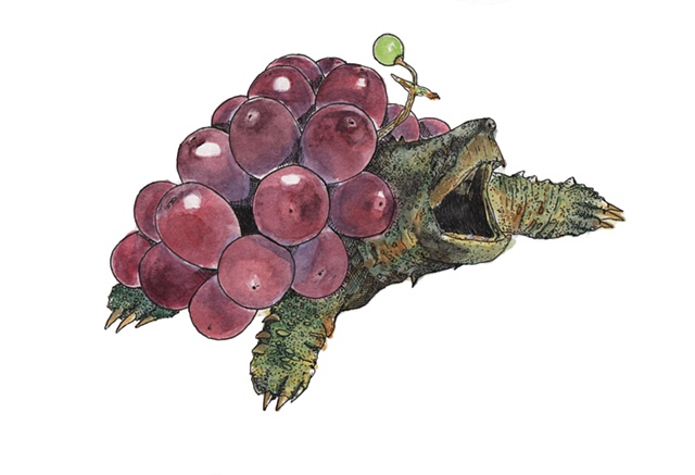 Alligator Grape Turtle
