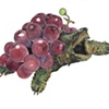 Alligator Grape Turtle