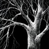 Night Tree #2