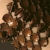 CM Bracelet #2