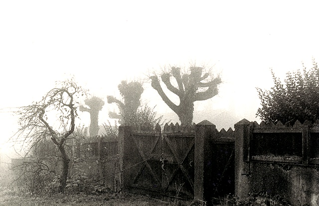Black and white photgraph of trees in fog near Dijon, France