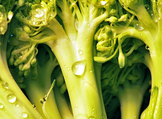Macro (Close up) of Broccoli